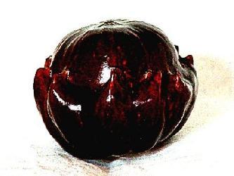 Crown of Thorns – Burgundy – 0101-P